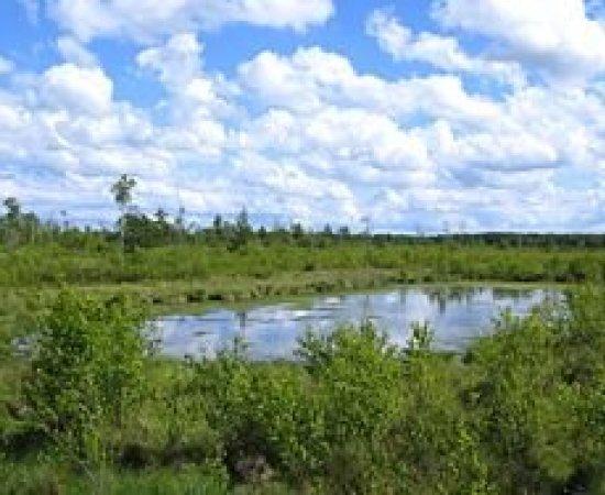 """Rezerwat przyrody """"Bielawa"""""""