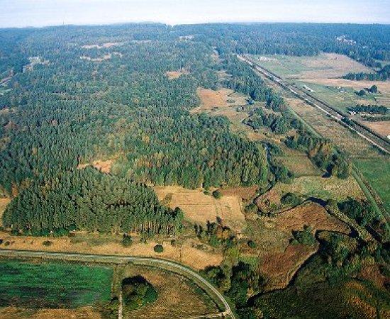 """Rezerwat  przyrody """"Darżlubskie Buki"""""""